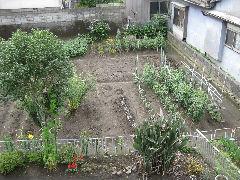 野菜畑写真